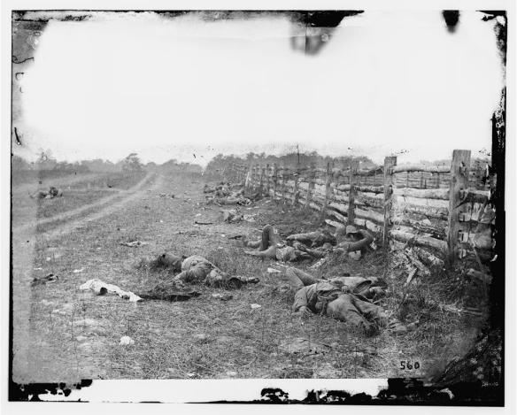 Ett annat krig. Döda sydstatssoldater längs Hagerstown Road efter slaget vid Antietam i september 1862